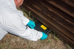A pest control specialist placing a small rodent trap