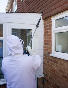 Roecall Services dealing with a wasps nest